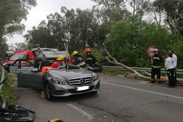 Fotos: Casal atingido por árvore na EN118